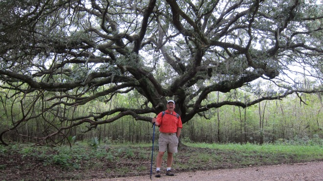 Omat Tree