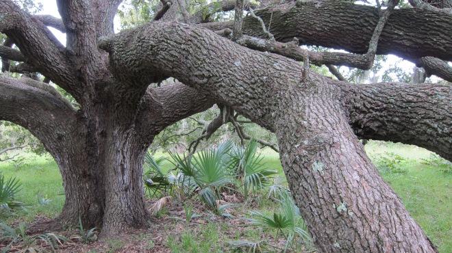 Tree up Close