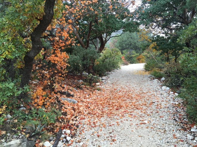 McKittrick Trail Color