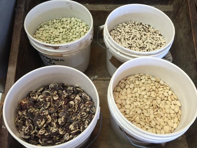 Farmers Mercantile Seed