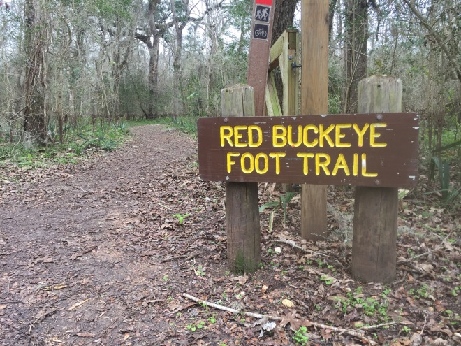 Red Buckeye Trail