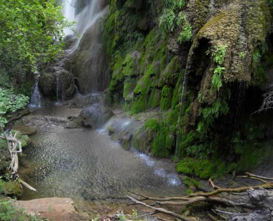 Gorman Falls (Web Pic)