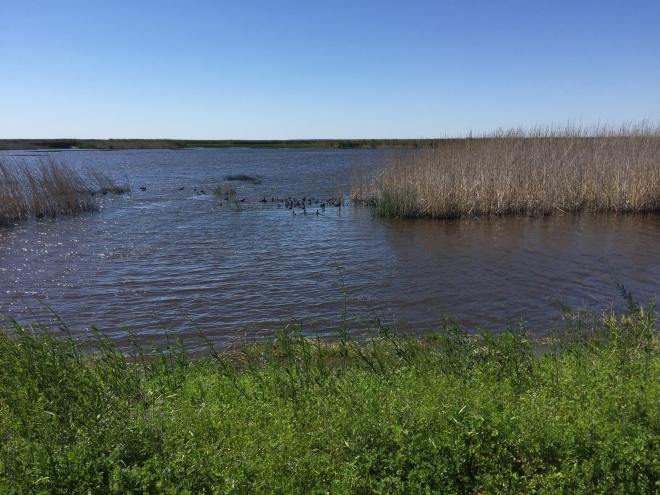 Anahuac Wetlands