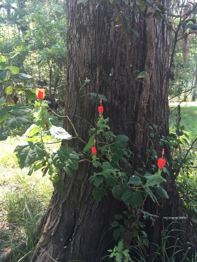 Tree and Turk's Cap