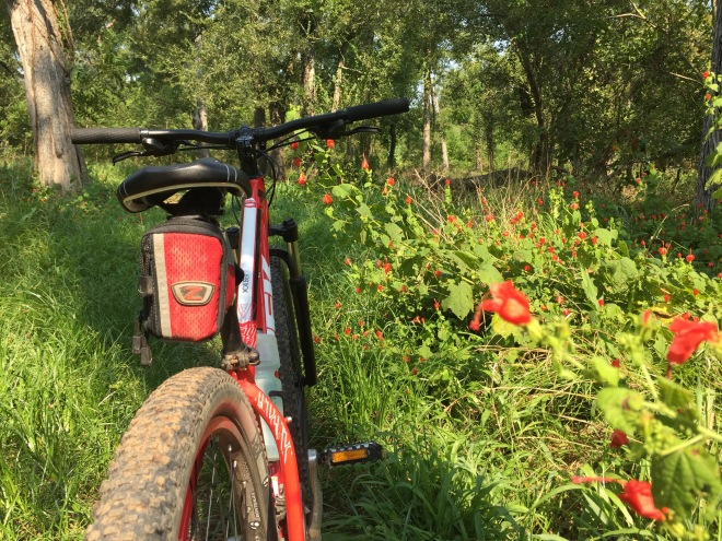 Bike and Turk's Cap