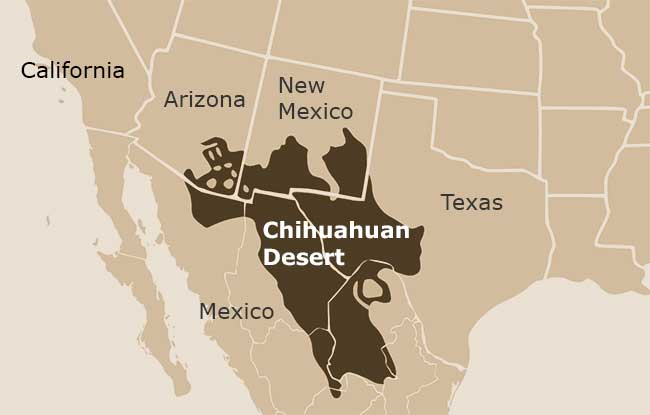 Chihuahuan Desert Map 5 Facts About the Chihuahuan Desert – Explore Texas Chihuahuan Desert Map